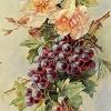 Вино и виноград (8)