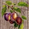Фрукты, овощи, ягоды (40)