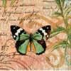 Бабочки и насекомые (13)