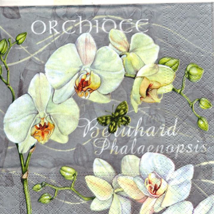 Салф. Орхидея на сером